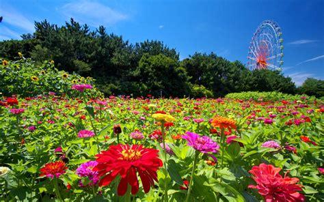 tappeto di fiori sfondi desktop fiori 43 immagini