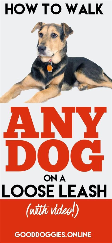 out on a leash how terry s gave me new books 2277 best animal health images on care