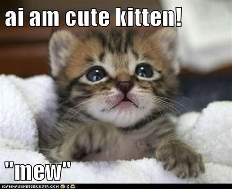 pictures with captions cats with captions www pixshark images