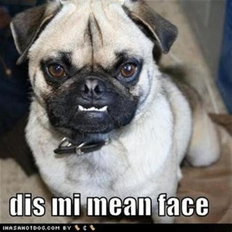 Depressed Pug Meme - angeloss on twitter quot quot bit of fluff old cunt who