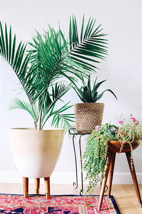 Indoor Planters by Gorgeous Indoor Planters You Will Fall In Love With
