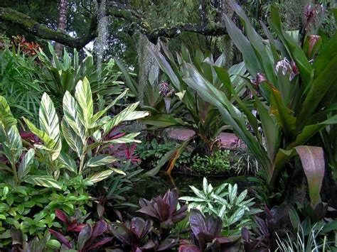 growing tropical plants indoors easy tropical houseplants hgtv