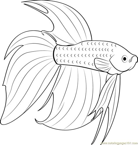 Betta Fish Coloring Pages betta fish coloring page free other fish coloring