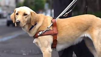 Guiding The Blind September Is Guide Dog Awareness Month