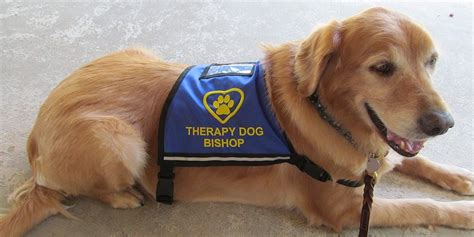 for dogs to be a therapy vests for therapy service working therapy vest