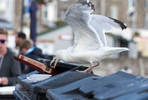 999 gull terror police warn over seaside bird calls