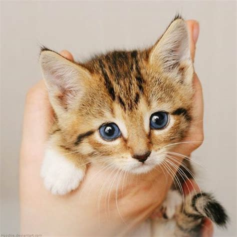 So Untuk Kucing Anggora gambar foto kucing lucu anggora imut aktual id