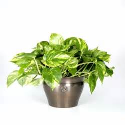 plants you can t kill interior office plants