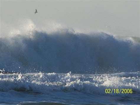 zip code lincoln city oregon lincoln city or seagul the water photo picture