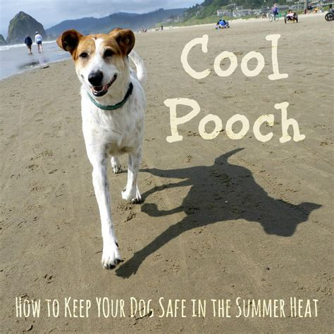 how to keep dogs cool outside how to keep your cool in the summer