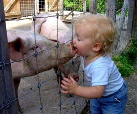 swing flu h1n1 statistics h1n1 swine flu h1n1 swine flu