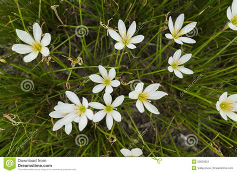 flowers photo tiny white flowers in bloom light hotel r best hotel deal site