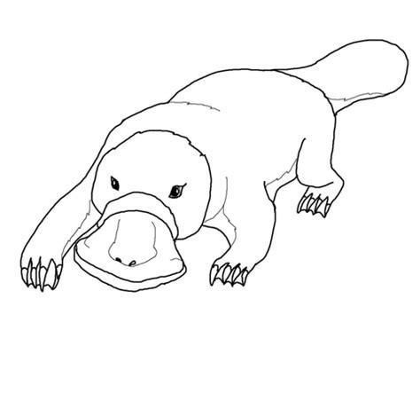 platypus coloring page supercoloring com