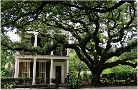 New Orleans Gardens by New Orleans Homes And Neighborhoods 187 Garden District Homes Photos 2