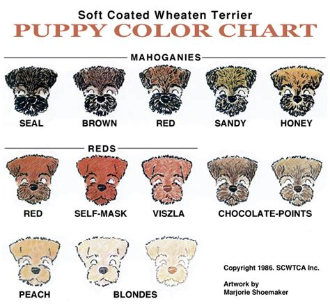 puppy color calculator scwtca puppy color chart