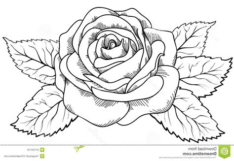 Sketch Outline by Drawing Outline Drawing Gallery