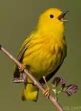 birding in british columbia nature at its best pinterest