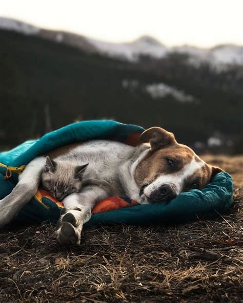 henry s puppies cat and best friends explore colorado s breathtaking moutainscapes