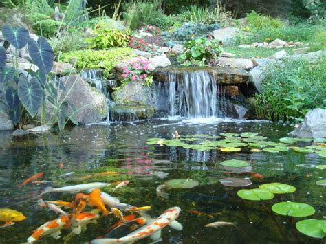 is a backyard pond an ecosystem is a backyard pond an ecosystem 28 images backyard