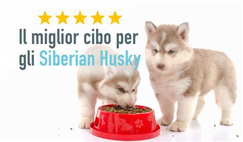 migliori alimenti per cani le migliori crocchette per cani cuccioli classifica e