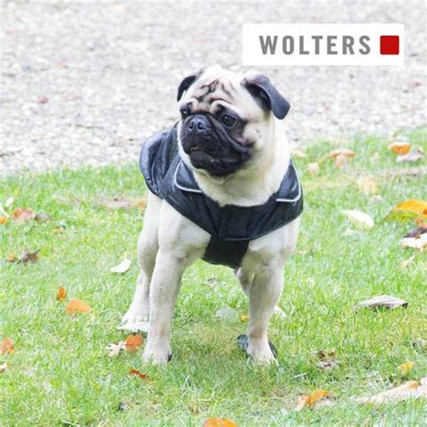 pug jacket wolters outdoor jacket for pug bulldog dapperdog co uk