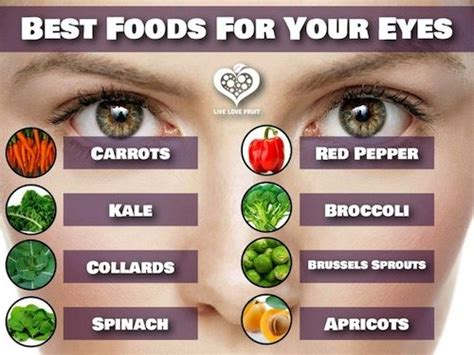 food the best nutrition for your four legged friend books nutrition essential for eye care eye care tips