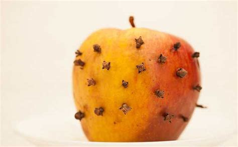 Fruit Flies In Bedroom by How To Get Rid Of Fruit Flies Naturally Diy Projects Craft