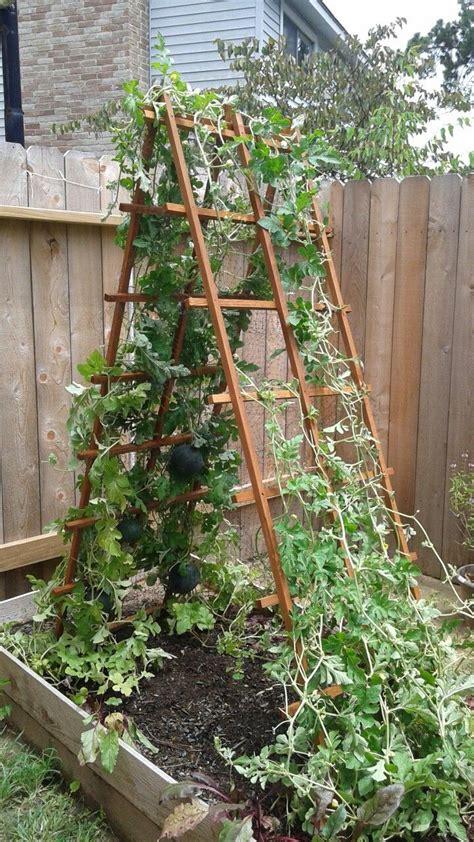 watermelon trellis with bird netting pockets garden