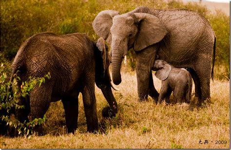 imagenes de animales salvajes de africa animales salvajes de 193 frica taringa