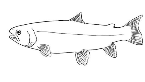 coloring pages rainbow trout rainbow trout coloring pages sketch coloring page