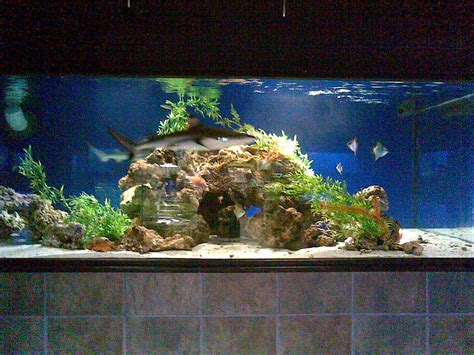 Saltwater Aquascaping by Cichlids 2500gallon Saltwater Aquascape