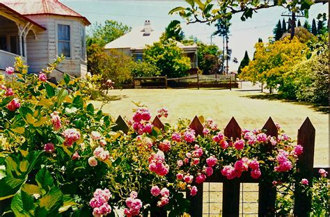 spring gardens spring in the blue mountains the season of joy sydney
