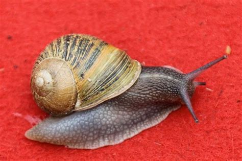 how to get a s nail to stop bleeding nine facts you never knew about snails they 14 000 teeth and some can even kill
