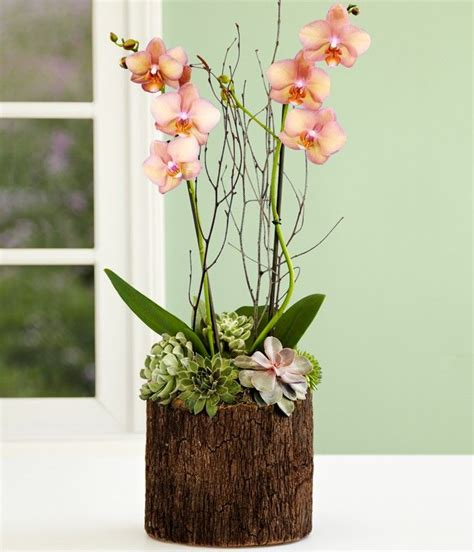 Läuse Auf Orchideen 4233 by Potted Orchid Centerpiece Search Orchid