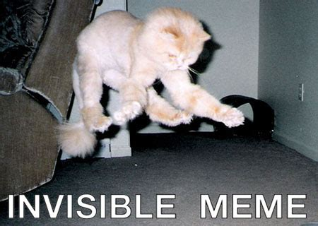 Invisible Cat Meme - invisible cat meme 28 images pin by drea cypress straw