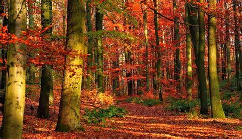 imagenes de otoño en hd imagenes de bosques imagenes de paisajes naturales hermosos