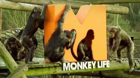 rescued ape quartet books image gallery monkey tv series