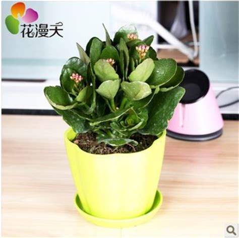 Desk Plants That Clean The Air by Kalanchoe Flowers Succulents Small Potted Flowering