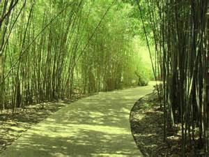 bamboo pathway by owlzeyez on deviantart
