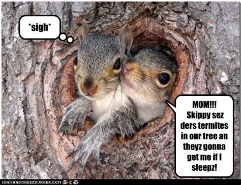 Funny Squirrel Memes - squirrel meme funny squirrel memes funny bug and pest
