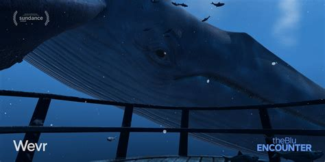 into the blue underwater sounds of nature for relaxation natural history museum presents its first virtual reality