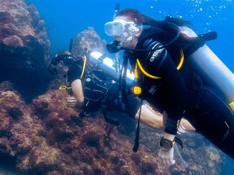 padi dive padi scuba diving courses in carriacou grenada