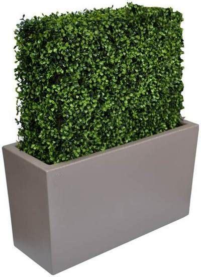 siepe in vaso per terrazzo siepe in vaso per terrazzo top le piante possono
