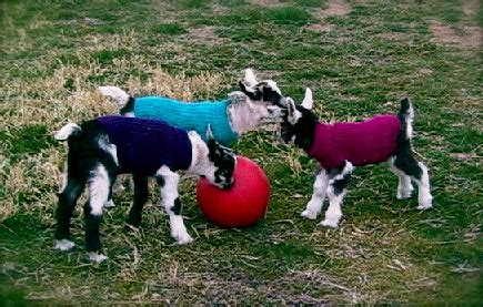 pattern for knitted goat sweater diy sweater patterns for goats pet project