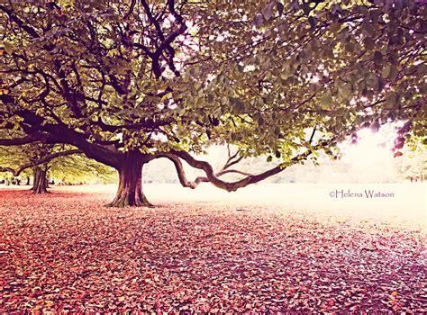 fiore autunnale sfondi luce sole alberi autunno le foglie