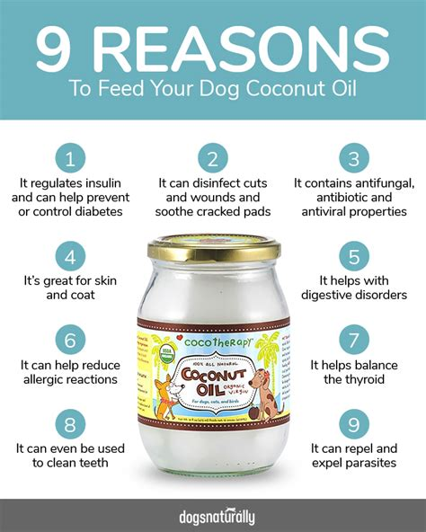 coconut and dogs should cats eat coconut cats