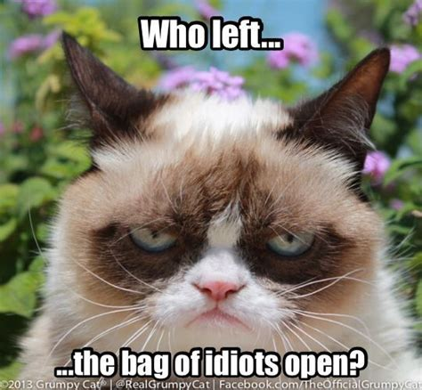 Grump Cat Meme - zucchini summer friday funnies grumpy cat