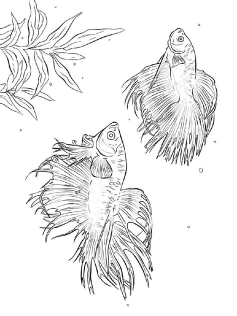 coloring pages betta fish betta fish coloring pages download and print betta fish
