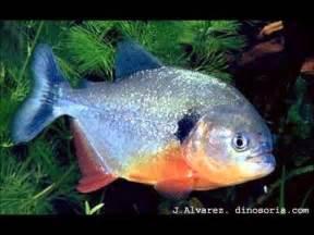 le poisson poissons les plus dangereux au monde