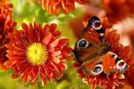 Papillon Et Fleur D Automne